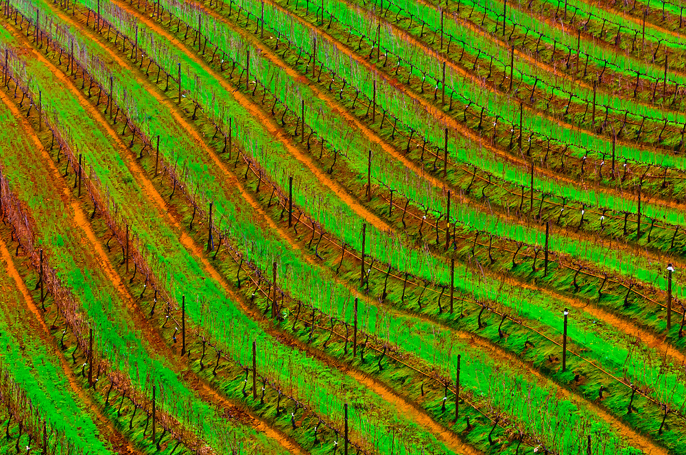 Vineyards, Tokara Winery, Helshoogte Pass, near Stellenbosch (Cape Town area), South Africa
