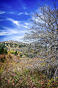 Hawthorn tree on the Appalachian Trail in Grayson Highlands State Park, Virginia looking north towards WIlburn Ridge.