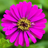Square Flower Images