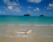 Shark, Lanikai, Oahu, Hawaii, USA<br />