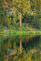 Trees reflected in warm glow of evening light, Black Pine Lake Okanogan National Forest Washington USA