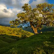 Sunol, California