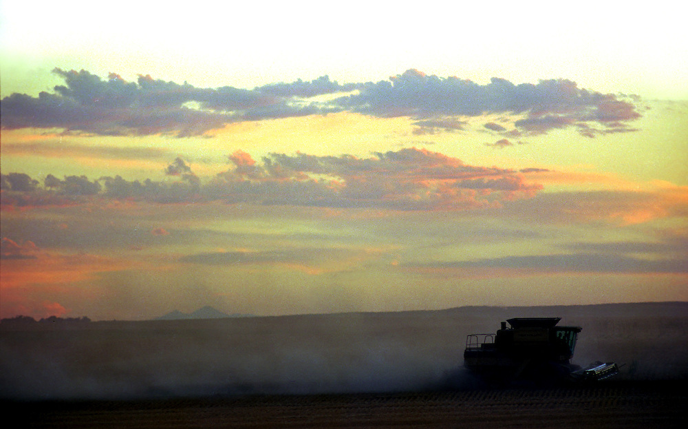 Eastern Colorado wheat harvest at dusk