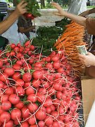 organic radish and carrots displayed at a green market