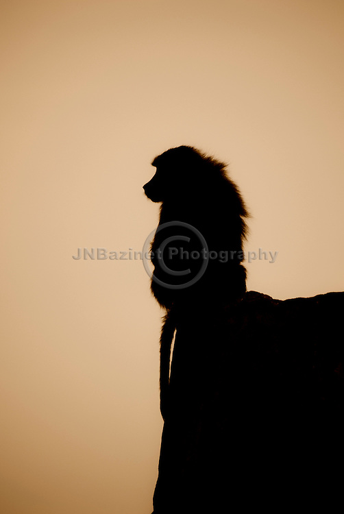 Powerful, simple image of baboon silhouette perched atop a cliff.