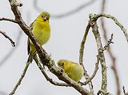 Field and Stream Birds