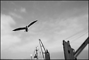 Seagull.<br />