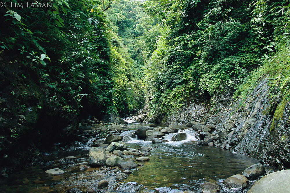A gorge with lush foliage and a stream in Sierra Madre Natural Park.