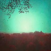 Surreal misty german woodlands