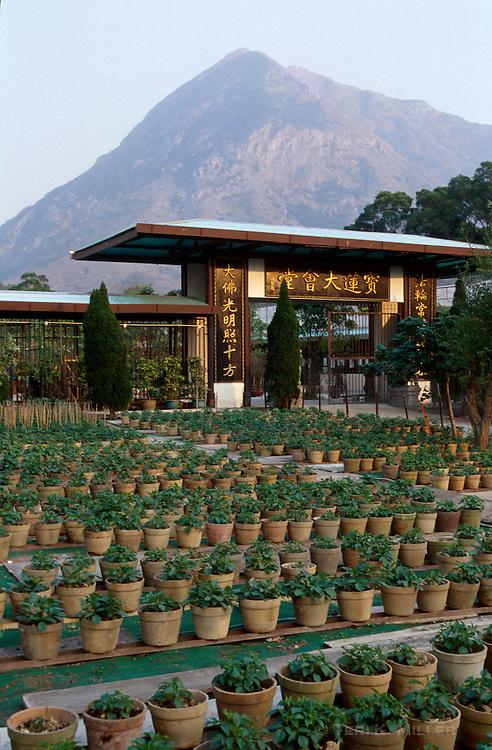 Herb garden at Po Lin Monastery on Lantau Island, Hong Kong, China.