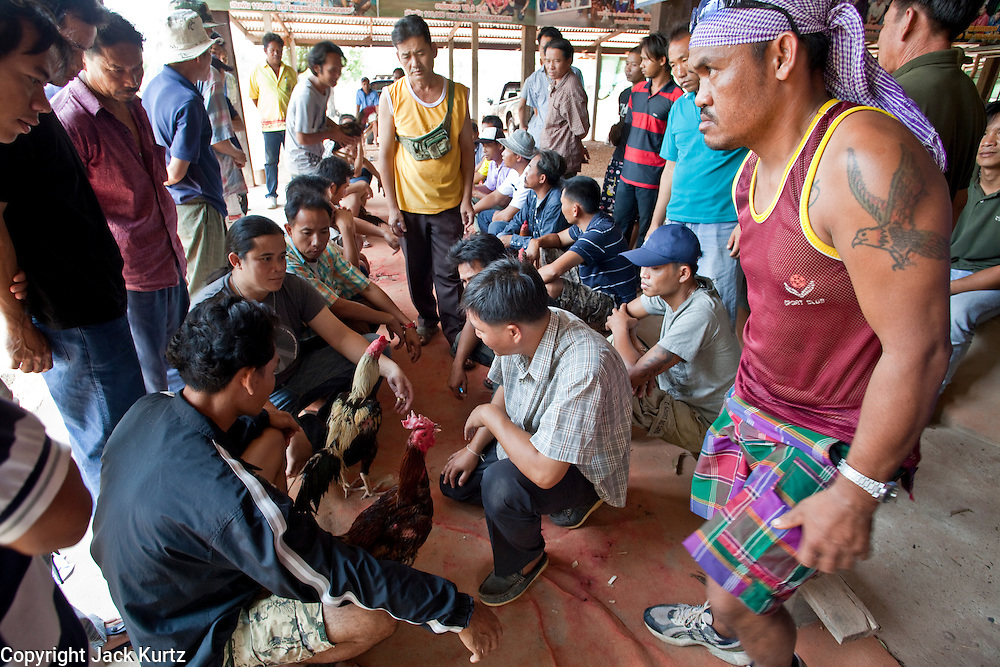 10 APRIL 2010 - PLA PAK, NAKHON PHANOM, THAILAND: Men compare their fighting cocks before a cock fight in rural Thailand. The fight promoter will pair the birds bases on size and experience.  Cockfighting is enormously popular in rural Thailand. A big fight can bring the ring operator as much as 200,000 Thai Baht (about $6,000 US), a large sum of money in rural Thailand. Fighting cocks live for about 10 years and only fight for 2nd and 3rd years of their lives. Most have only four fights per year. Fighting cocks in Thailand do not wear the spurs or razor blades that they do in some countries and most times the winner is based on which rooster stops fighting or tires first rather than which is the most severely injured. Although gambling is illegal in Thailand, many times fight promoters are able to get an exemption to the gambling laws and a lot of money is wagered on the fights. Many small rural communities have at least one cockfighting arena.   PHOTO BY JACK KURTZ