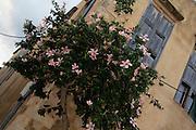 Rethymnon, Kreta, 2011. La ville de Rethymnon, Crète. Visite du Chateau, de l'ancienne Mosquée et du port venitien. © Romano P. Riedo   fototpunkt.ch