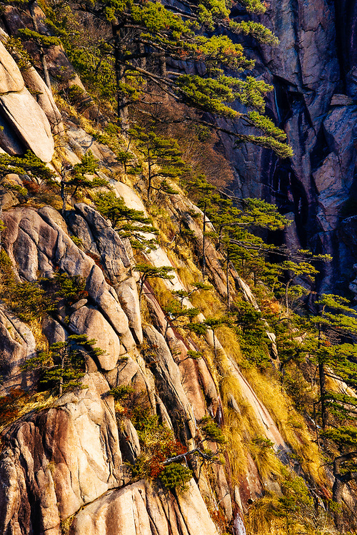 The granite and Huangshan Pine trees of Huang Shan China.