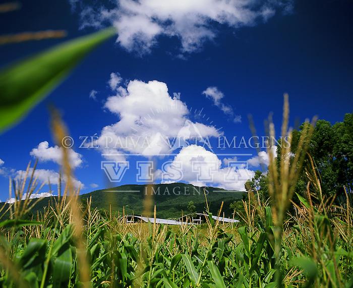 Plantacao de milho e usina de leite ao fundo, Canelinha, Santa Catarina, Brasil. Foto de Ze Paiva/Vista Imagens