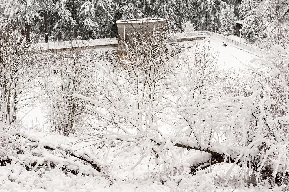 Snow fall in Mount Tabor Park, Portland, Oregon, USA. Photo: 11 January 2017.