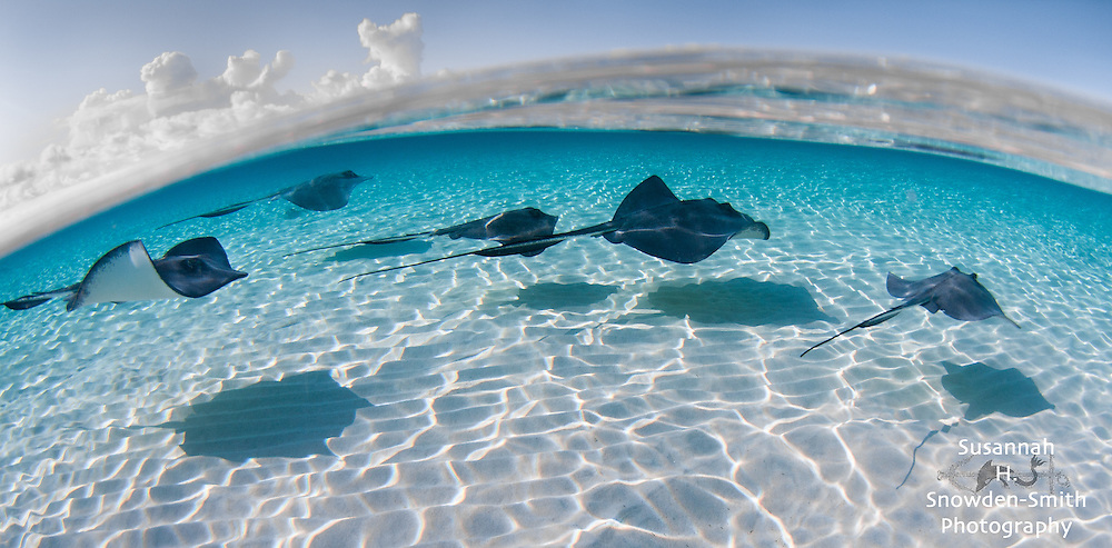 """Flight School"" - Schooling stingrays and sky in an over-under split shot.  Photographed at The Sandbar, Grand Cayman."
