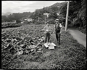 Katsau Shoji in his cabbage patch. Having relocated from the heavily contaminated village of IItate  Shoji san  and his wife grow cabbages on a piece of land he rents only a few meters larger then one  of the greenhouses on his family farm which has been worked by his family for more then 5 generations. now contaminated with fallout form the Fukushima Diachi Nuclear power plant destroyed after the  2011 great Tohoku earthquake.