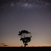 Lone tree at night with stars