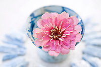 Simple pink flower resting in an old Saki bowl circled by Kyanite stone .  Still Life Photography.