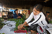 "25 FEBRUARY 2008 -- MAE SOT, TAK, THAILAND: Burmese migrant women pack roses for shipment to Bangkok on a commercial rose farm near Mae Sot, Thailand. Workers on the farm work 9 hours a day, 7 days a week. Men on the farm are paid about $2 (US) per day, women are paid about $1.75 (US) per day. There are millions of Burmese migrant workers and refugees living in Thailand. Many live in refugee camps along the Thai-Burma (Myanmar) border, but most live in Thailand as illegal immigrants. They don't have papers and can not live, work or travel in Thailand but they do so ""under the radar"" by either avoiding Thai officials or paying bribes to stay in the country. Most have fled political persecution in Burma but many are simply in search of a better life and greater economic opportunity.  Photo by Jack Kurtz"