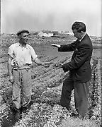 at Carna. Farming, Boat Bulding with the Cloherty family..14/05/1959<br />