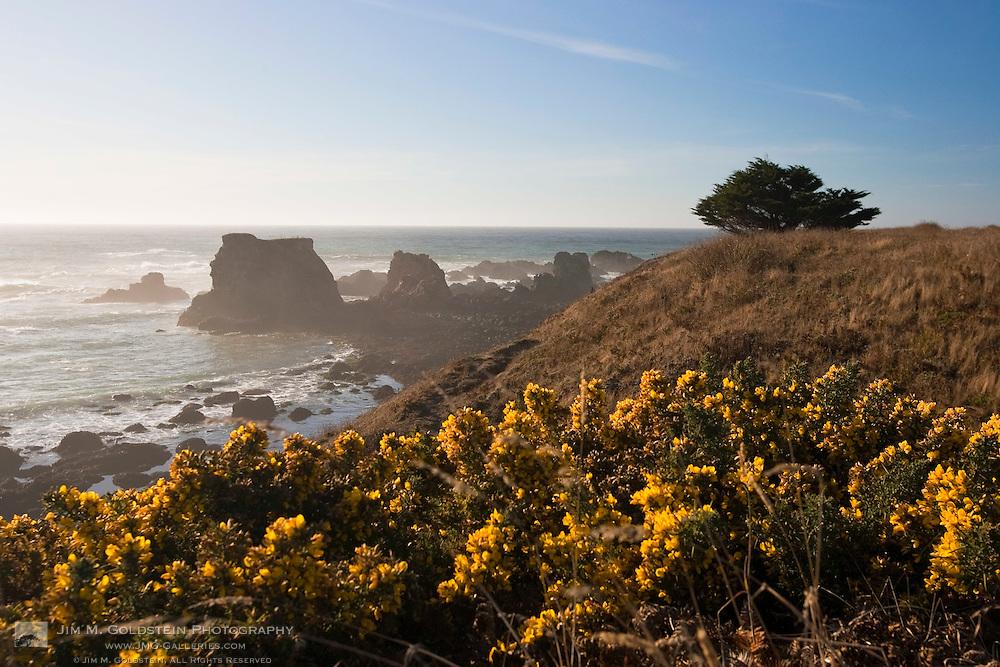 Wildflower Coastal View - Jug Handle State Natural Reserve, California