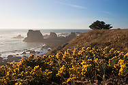 Wildflower Coastal View - Jug Handle State Natural Reserve, California