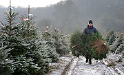 © under license to London News Pictures. 28/11/2010. Adam Brock a farm worker carries harvested Christmas trees.  Staff at the Christmas Tree Farm open for business a week early today (Sunday) to take advantage of the good Christmas cheers brought on by the Winter Weather. The Christmas Tree Farm, Chesham,  have been retailing Christmas trees for 22 years and growing them for 18 years. Photo credit should read: Stephen Simpson/LNP