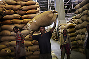 Ethiopian workers carry 100 kilo bags of export quality green coffee beans into the giant warehouse of the Keffa Export Coffee Processing Plant February 21, 2007.  42% of Ethiopia's annual 120,000 metric tons of export coffee is processed at this center, and overall 1 in 4 persons in Ethiopia are employed by the coffee industry.