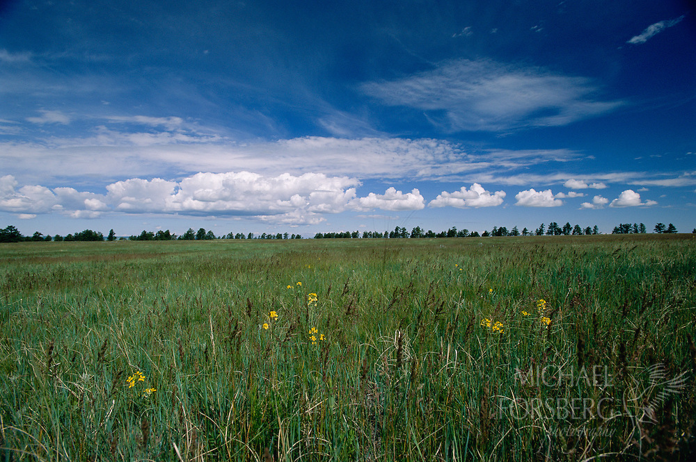 Wildflowers under a big prairie sky in Harding County, South Dakota