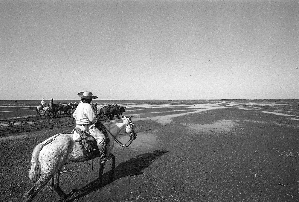 Pantanal Cowboys: at the Fazenda Baia de Dom Bosco, once a year during the dry season, cowboys ride out to the ranch's furthest pastures to round up cattle, crossing rivers and acres of open plains.