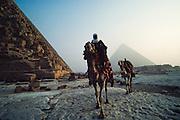 Cairo. Camel rider at the Great Pyramids at Giza.