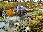 22 FEBRUARY 2017 - BAN LAEM, PETCHABURI, THAILAND: A salt worker washes out his baskets in an irrigation canal during the salt harvest in Petchaburi province of Thailand, about two hours south of Bangkok on the Gulf of Siam. Salt is collected in coastal flats that are flooded with sea water. The water evaporates and leaves the salt in large pans. Coastal provinces south of Bangkok used to be dotted with salt farms, but industrial development has pushed the salt farms down to remote parts of Petchaburi province. The harvest normally starts in early February and lasts until early May, but this year's harvest was delayed by a couple of weeks because of unseasonable rain in January that flooded many of the salt collection ponds.    PHOTO BY JACK KURTZ
