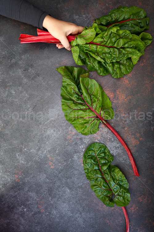 A hand holding red-stemmed chard.<br />