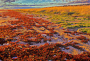 Autumn on tundra along Hudson Bay<br /> Churchill<br /> Manitoba<br /> Canada