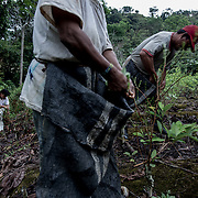 Le persone provenienti dalla comunit&agrave; ashainka sono state contrattate da Guillermo Pangoa per raccogliere le foglie di coca del suo campo. Verranno pagate 1 Sol Peruviano al KG.<br />
