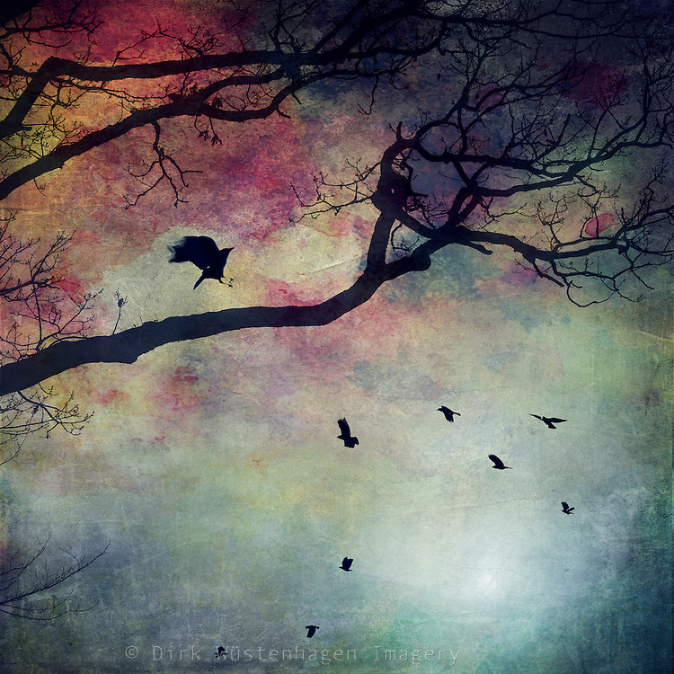 Silhouette of a tree and birds against a colourful background<br />