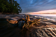 A twisted cedar stump sits in the Hurricane River at dusk<br />