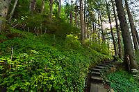 Mt. Dewey Trail, Wrangell, Southeast Alaska USA