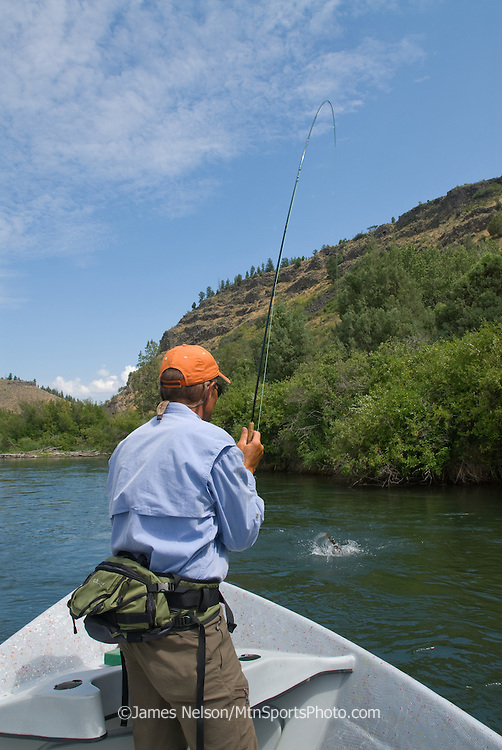 From the front of a drift boat, a fly fisherman plays a trout on the South Fork of the Snake River, Idaho.