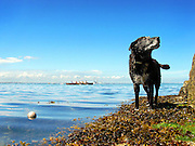 A dog waits for someone to play fetch. Monkstown, Co. Dublin. Ireland.
