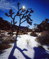 I love to photograph the rare snow and Joshua Trees during Winter in Joshua Tree National Park.