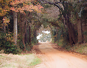 """Round hay bale at the end of red dirt road through tree tunnel in hardwood forest of Northeast Texas. NOTE: Click """"Shopping Cart"""" icon for available sizes and prices. If a """"Purchase this image"""" screen opens, click arrow on it. Doing so does not constitute making a purchase. To purchase, additional steps are required."""