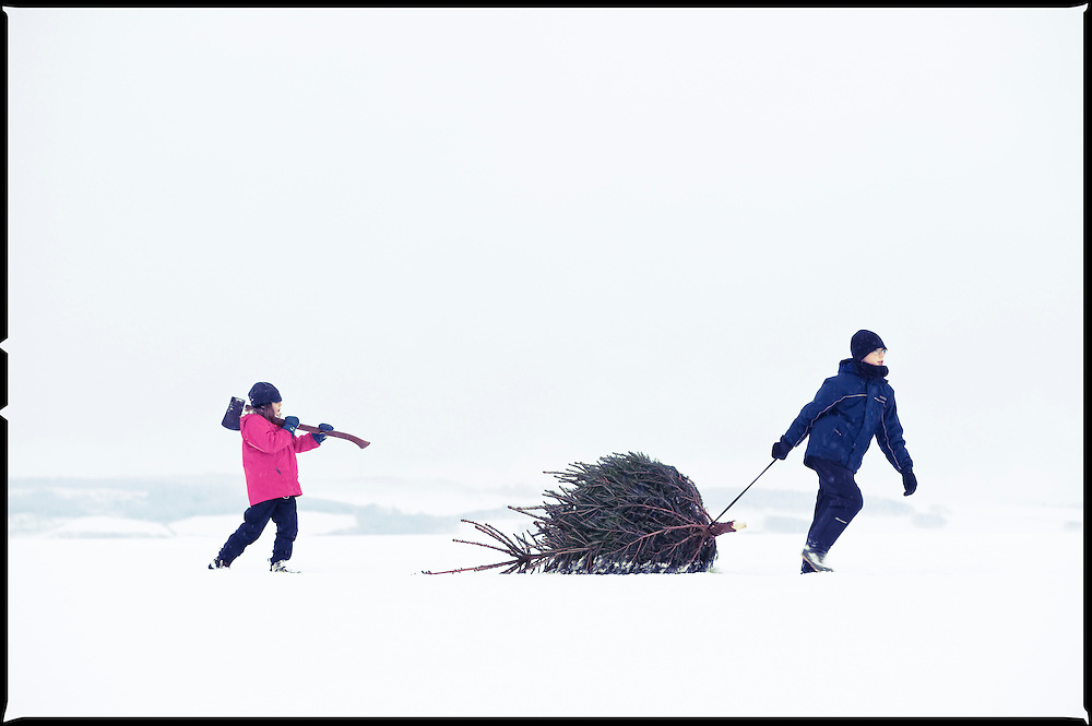 Boy and girl dragging a Christmas tree home from the forest