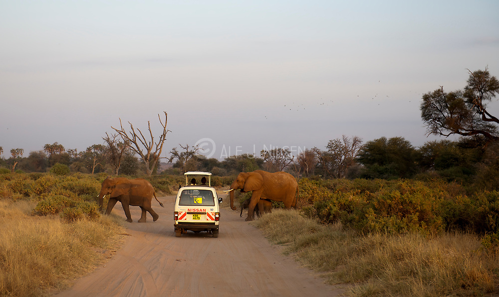 Elephant road crossing in Samburu National Reserve, Kenya.