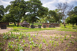 January 11, 2018 - Livingstone, Zambia - Young corn crop sprouting through the earth in a village in Livingstone, Zambia (Credit Image: © Edwin Remsberg / Vwpics/VW Pics via ZUMA Wire)