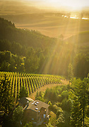 Aerial view over Roots estate vineyard, Yamhill-Carlton AVA, Willamette Valley, Oregon