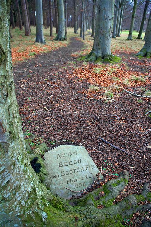 Plaque about Beech and Scotch Fir in the Phoenix Park, Dublin