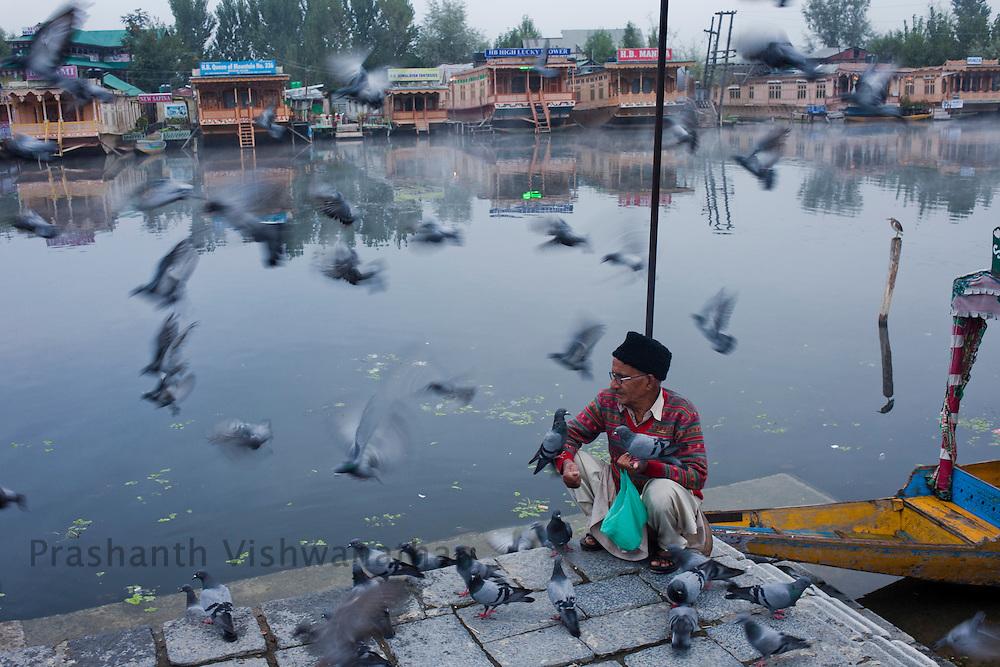 A man feeds pigeons by the Dal lake, September 2011, Kashmir, India. Photographer: Prashanth Vishwanathan