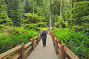 Boardwalk in temperate rain forest of Cathedral Grove<br />